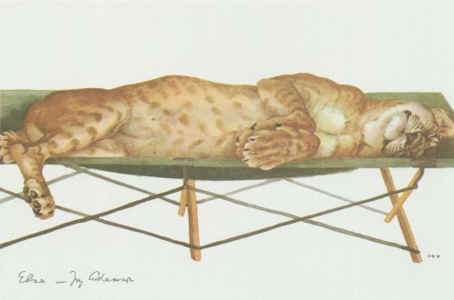 Elsa on a campbed - painting by Joy Adamson