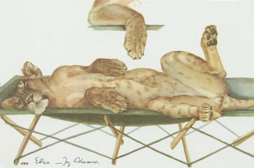 Elsa on a campbed wit paw inset - painting by Joy Adamson